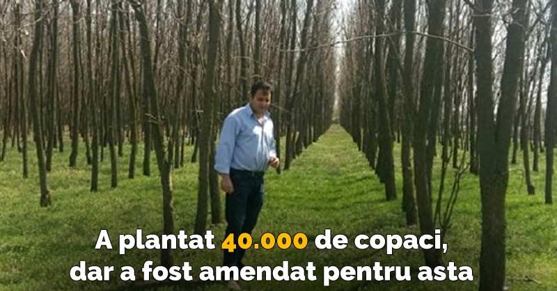 Un fermier a plantat 40.000 de copaci pe terenul său, însă a fost amendat