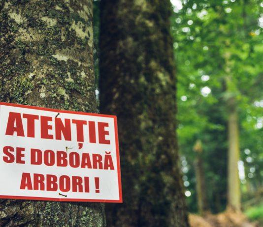 Garda Forestieră Suceava confirmă parțial acuzele lansate în cadrul confruntării de la Vama între activiști ai Greenpeace cu șefi ai Romsilva privind nereguli în păduri sucevene