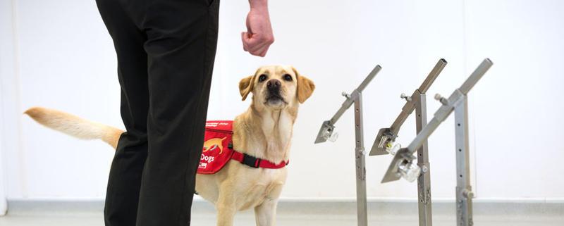VIDEO Pot câinii să detecteze persoanele infectate cu Covid-19? În Marea Britanie se fac teste
