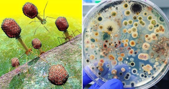 Care este diferenţa dintre virus şi bacterie şi care este pericolul pentru om