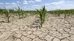 Orban: Normativele pentru despăgubirea fermierilor afectaţi de secetă, după evaluarea din teren
