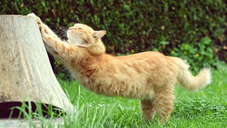 O batrana de 90 de ani a aruncat carja de care se sprijinea in pisica vecinei. Cazatura a bagat-o in spital cu fractura si lovituri la cap