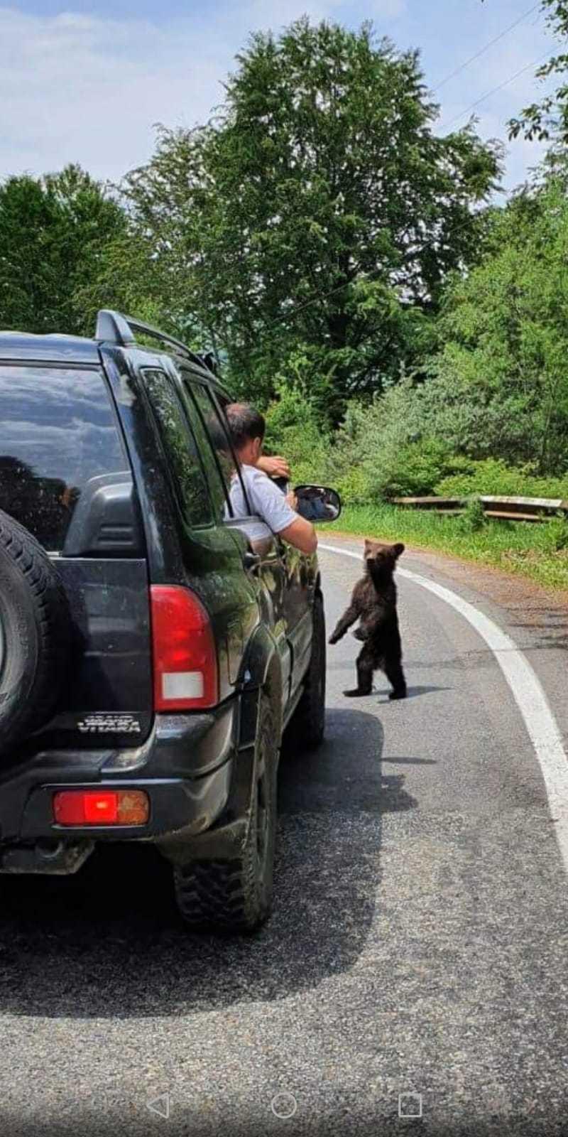 Pui de urs care se rătăcise şi căzuse într-un pârâu, salvat de jandarmii montani din Argeş - VIDEO